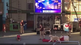 Animal actors fail; dog urinates on kid