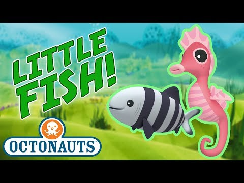 Octonauts - Learn about Little Fish   Cartoons for Kids   Underwater Sea Education