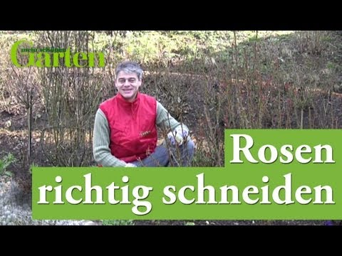 gartentipp rosen richtig schneiden youtube. Black Bedroom Furniture Sets. Home Design Ideas