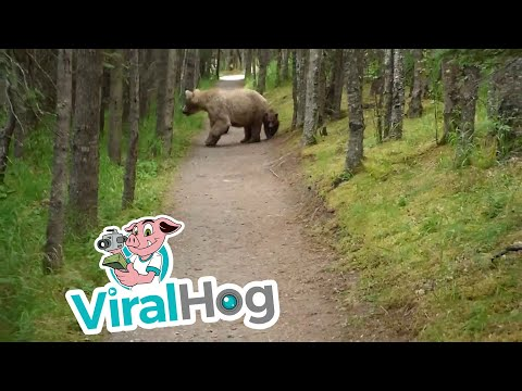 Thumbnail: Hiking With Bears