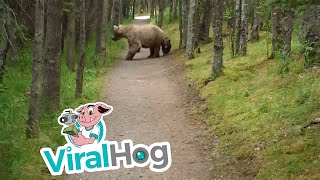 Hiking With Bears || ViralHog thumbnail