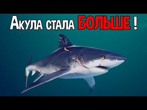 Акула эволюционировала и стала больше !
