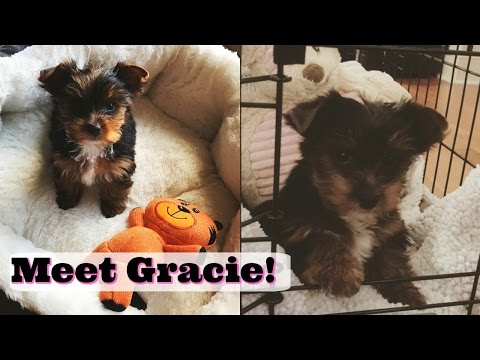 Meet Gracie (Our New Yorkie Puppy) | Vlog