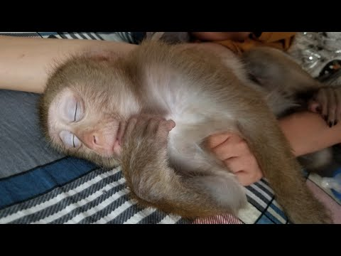 Monkey Baby Nui | 50 nuances of Nui when sleeping