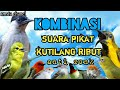 Suara Pikat Semua Jenis Burung Anti Zonk  Mp3 - Mp4 Download