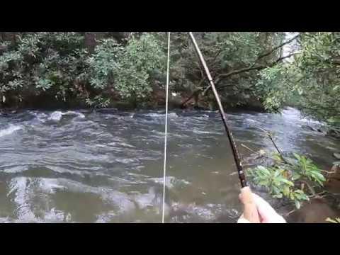 Trout Fishing GA (Duke's Creek April '19 PT2)