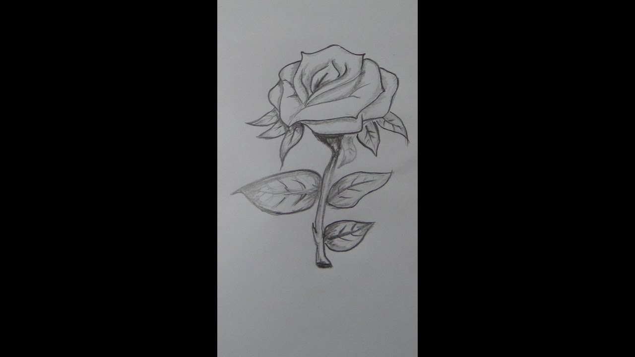 how to draw small roses