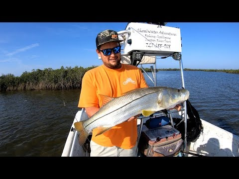 3 Easy Ways To Catch Snook In Summer