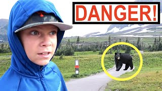 BEAR ON THE TRAIL at Glacier National Park!