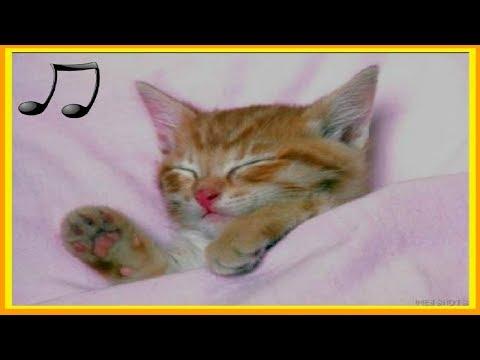 🎧Musica Diseñada para Gatos ★Musica calmante para Dormir Gatos y Gatitos Inquietos 2018
