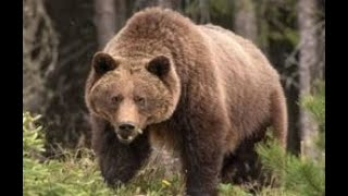grizzly-this-one-should-have-ate-me