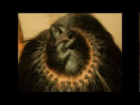 Brazilian Knots fusion - YouTube