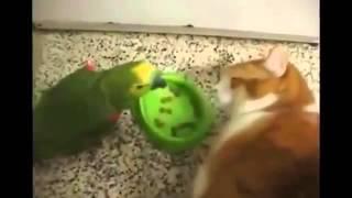 Попугай хам и справедливый кот во время просмотра видео нужно пить воду)