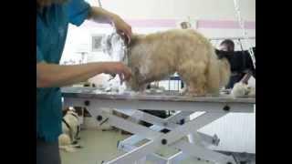 hand scissoring dogs