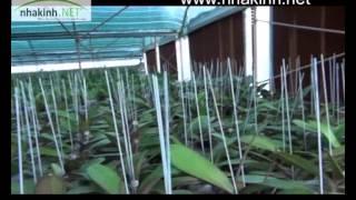 Kỹ thuật làm lạnh nhà kính, Nhà kính nông nghiệp công nghệ cao