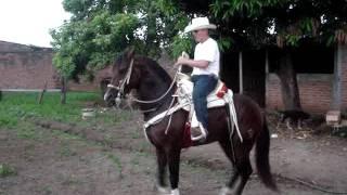el 24 caballo de zacualpan nayarit