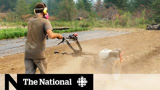 B.C. dealing with the widespread effects of drought