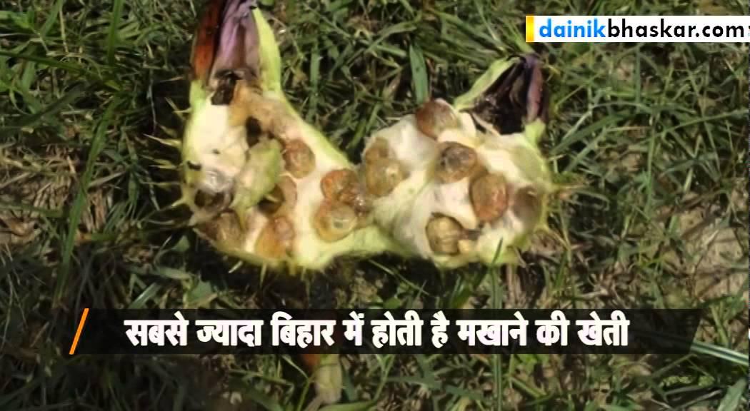 Image result for makhana bihar