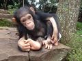 【感動】暗闇に閉じ込められて数か月後、やっと太陽に出会えたチンパンジーの赤ちゃんのうれしそうな表情