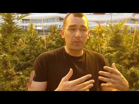 Ryan Shaw: How to run a 100% legal marijuana farm in Colorado