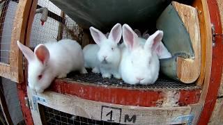 На сколько затратно кролиководство||Сколько еды необходимо кроликам летом