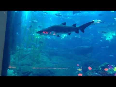 Dubai Mall Aquarium Old Video – I recorded the video 2013— YouTube Update 2021