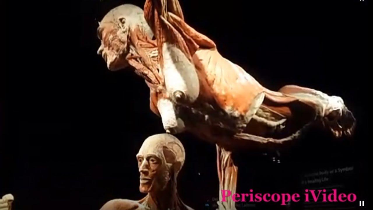 Museum Of Dead Bodies Berlin Germany 2016 Periscope Hd Youtube