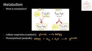 SBI4U/Grade 12 Biology: 2.1 Metabolism and Energy
