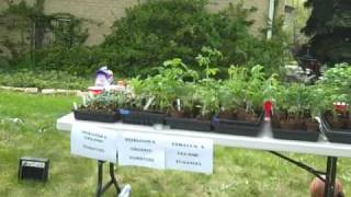Our Attempt To Sell Tomato Plants
