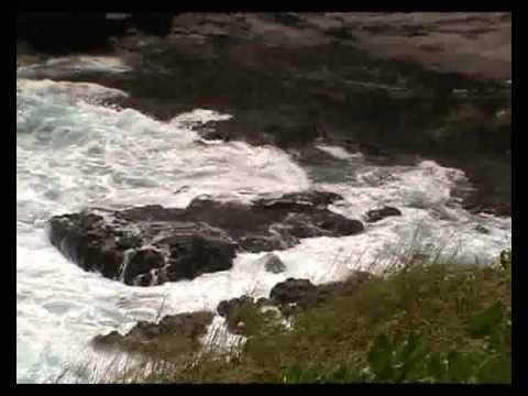 Hawaii Big Island seal monk