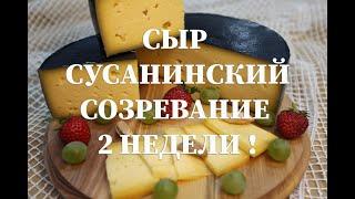 Сыр Сусанинский , рецептура приготовления в домашних условиях   Вызревание 2 недели