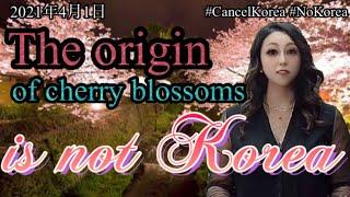 #CancelKorea #NoKorea, The origin of cherry blossoms is not Korea.