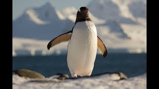 Video Experiencia Antártica_Virtual reality download MP3, 3GP, MP4, WEBM, AVI, FLV Desember 2017