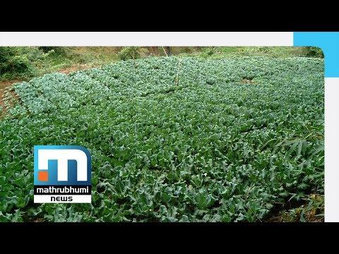 Organic Farming: KSRTC Conductor Reaps Good Harvest| Mathrubhumi News