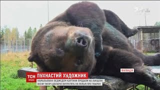 У Фінляндії на аукціоні продали картини, намальовані бурим ведмедем