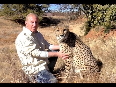 Thumbnail: Comforting A Sick Cheetah | Tame Big Cat Visits Friend Even When Sick As A Dog | Stomach Bug