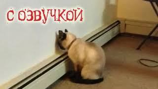 Подборка смешных приколов с котами с озвучкой!!!!!!