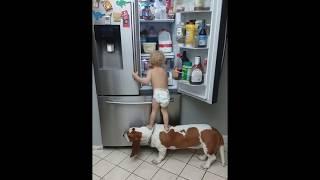 「なんて献身的なの!」赤ちゃんを手伝ってあげる犬(動画)