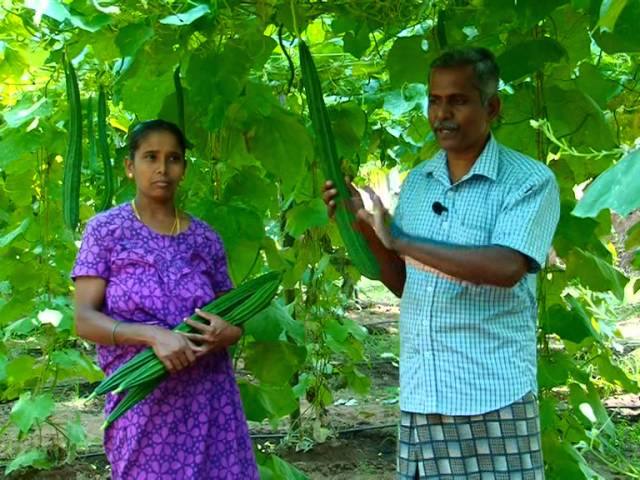 vegetable cultivation in kerala Part 2