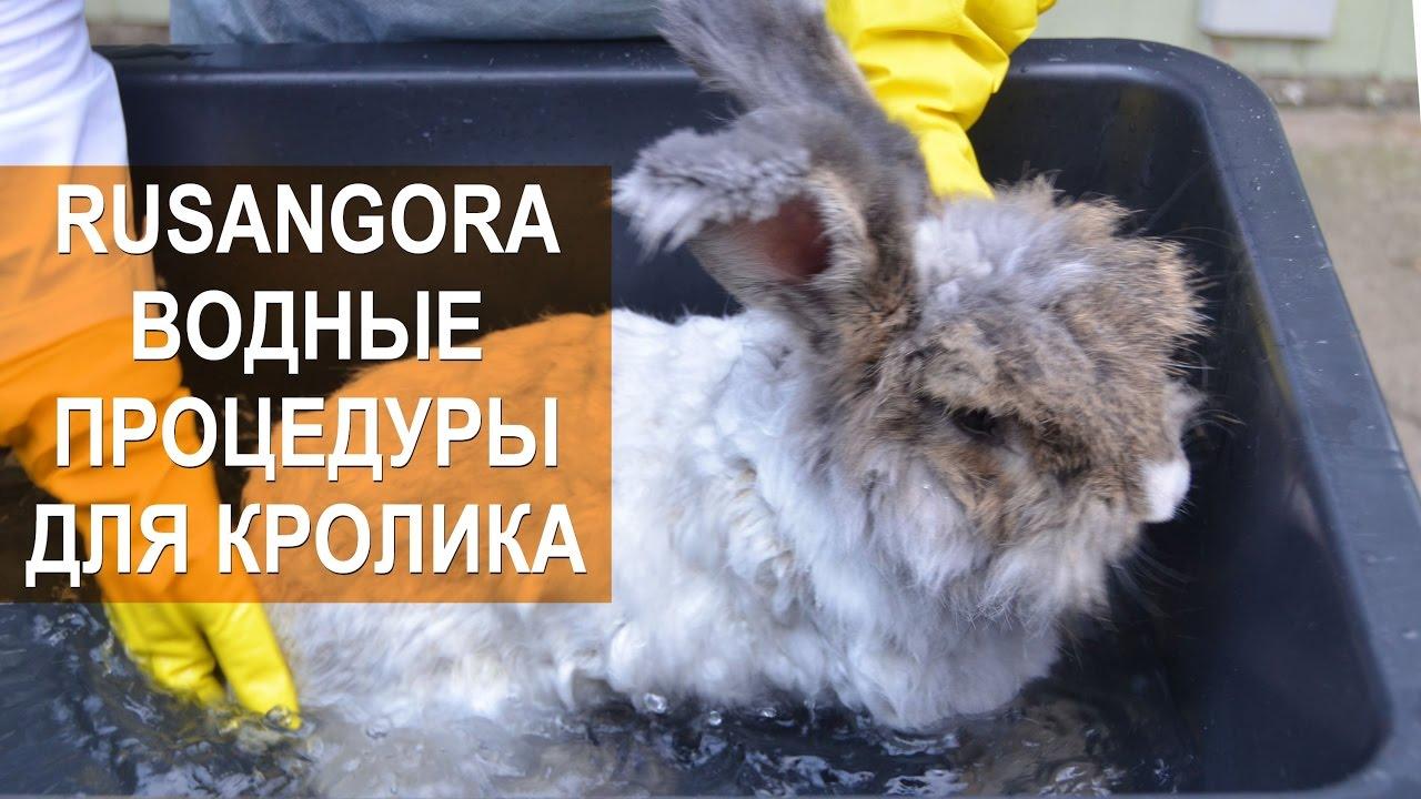 Кролики — деревня в ногинском районе московской области россии, входит в состав городского поселения электроугли.