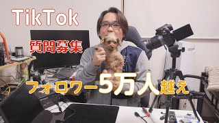 【質問募集】自慢の愛犬カプリコへの質問受け付けます【TikTok】 thumbnail