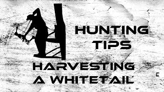 Hunting Tips: Harvesting a Whitetail
