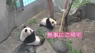 8/19  お外満喫のシャンシャン thumbnail