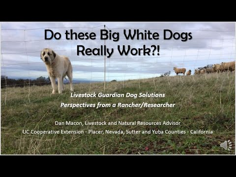 2018 Livestock Guardian Dog Solutions