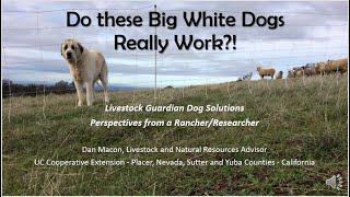 2018 Livestock Guardian Dog Solutions