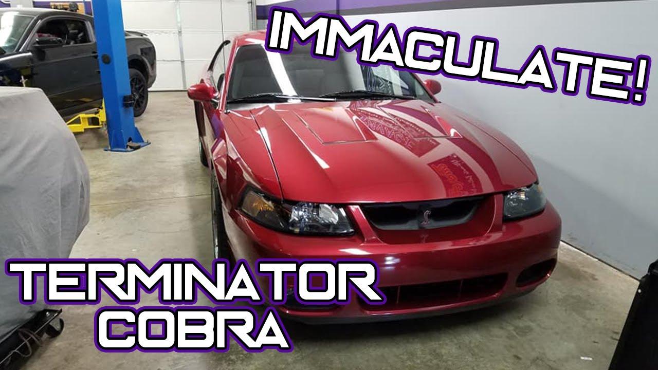 Terminator Cobra Exhaust