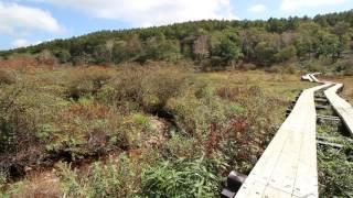 2016年秋ー栃木県横根(井戸湿原)(その2)