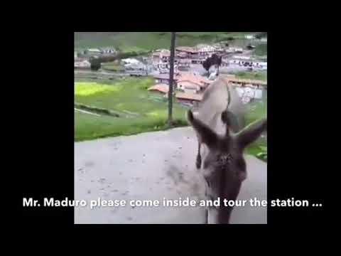 Maburro: Venezuelan dictator compared to a donkey