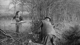 Hedging (1942)