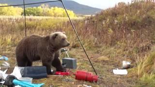 Камчатка и ее обитатели- туристы и медведи 5